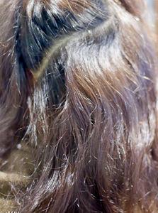 クセの状態、縮毛とウエーブが混在している
