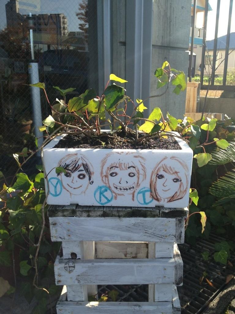 11月12日記事jamuの小さな仲間たち画像2