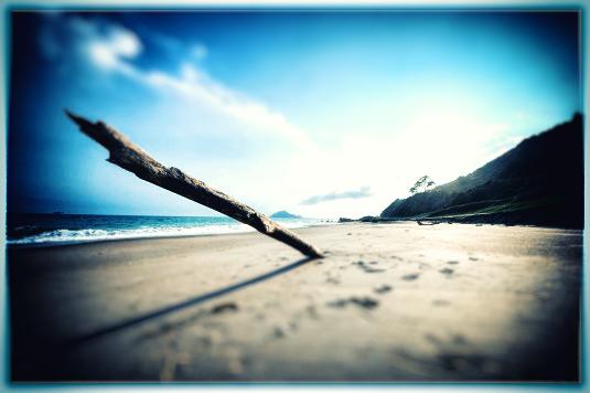 浜辺にささる朽ちた木